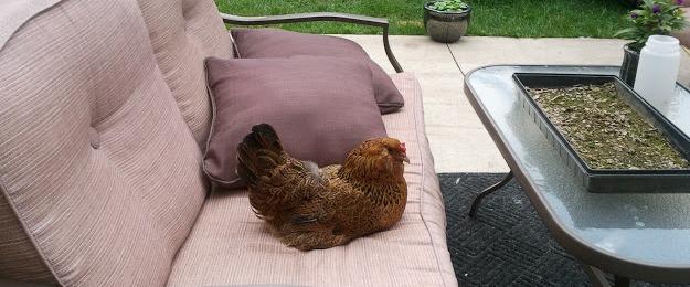 Murano Chicken Farm small